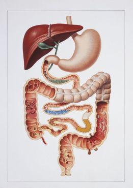 Appareil digestif